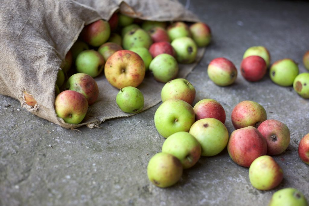 Reduce food waste - 10 easy ways